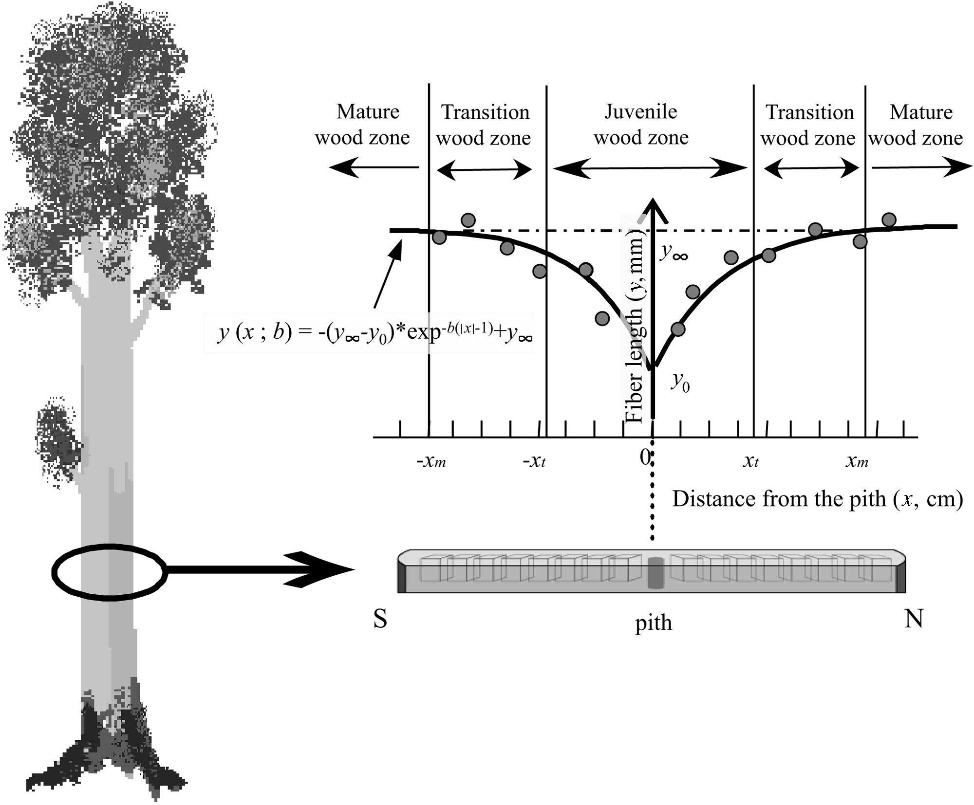 Determining Factor Of Xylem Maturation In Eucalyptus Grandis Planted In Different Latitudes And Climatic Divisions Of South America A View Based On Fiber Length Used to refer to the starting height of an object in newtonian physics textbooks. canadian science publishing